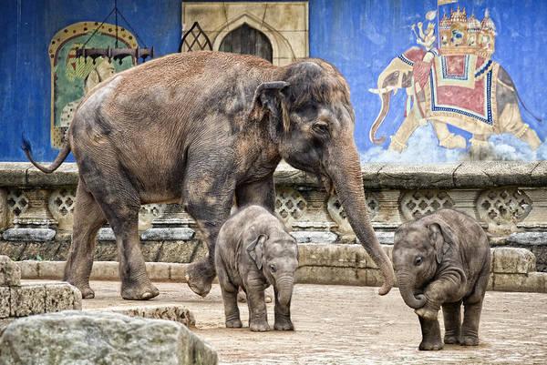 Wall Art - Photograph - Dwarfish Giants by Joachim G Pinkawa