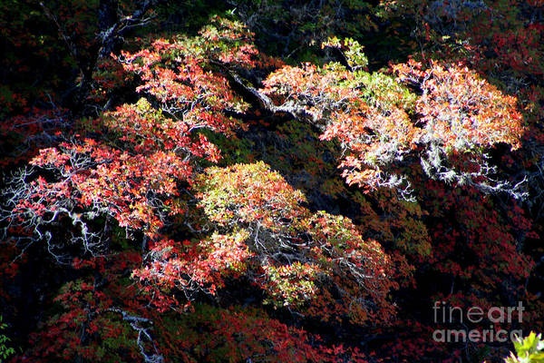 Lost River State Park Wall Art - Photograph - Dying Beauty by Laurette Escobar