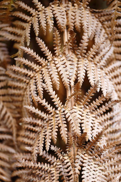 Photograph - Dying Fern Background by Paul Cowan