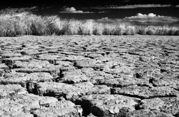 Photograph - Dying Of Thirst by Laurie Search