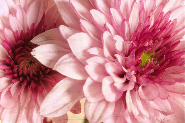 Wall Art - Photograph - Dynamic Pink Duo by Heidi Smith