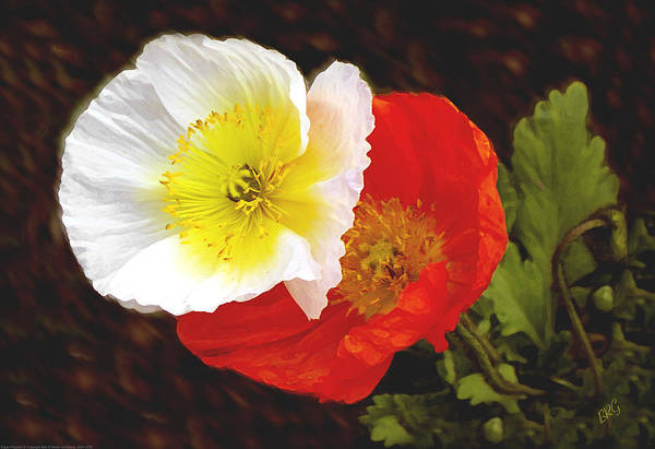 Photograph - Eager Poppies by Ben and Raisa Gertsberg