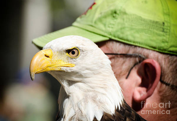 Photograph - Eagle And His Man by Les Palenik