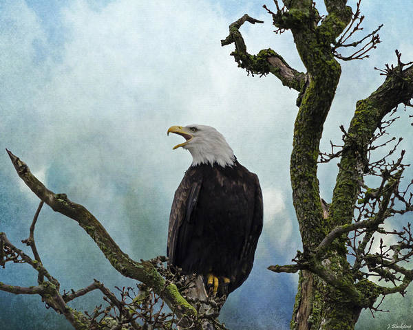 Photograph - Eagle Art - Character by Jordan Blackstone