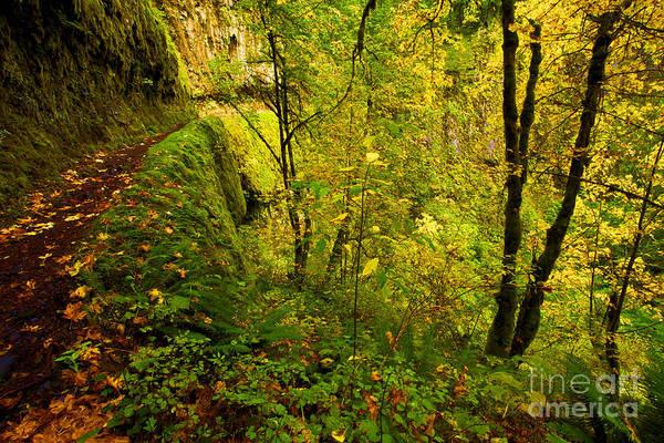 Photograph - Eagle Creek Fall by Adam Jewell