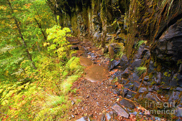 Photograph - Eagle Creek Rain Forest Trail by Adam Jewell