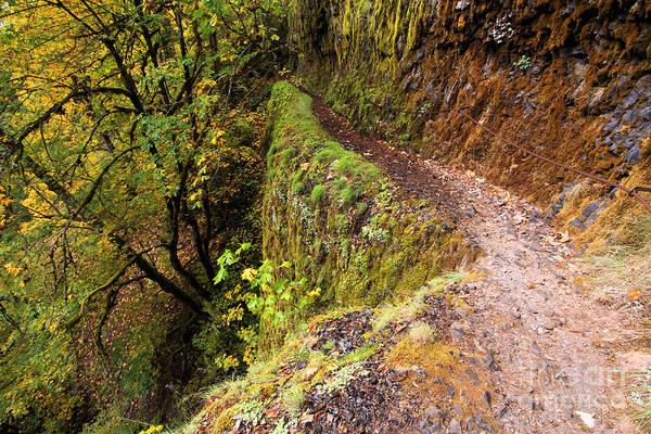 Photograph - Eagle Creek Walk by Adam Jewell