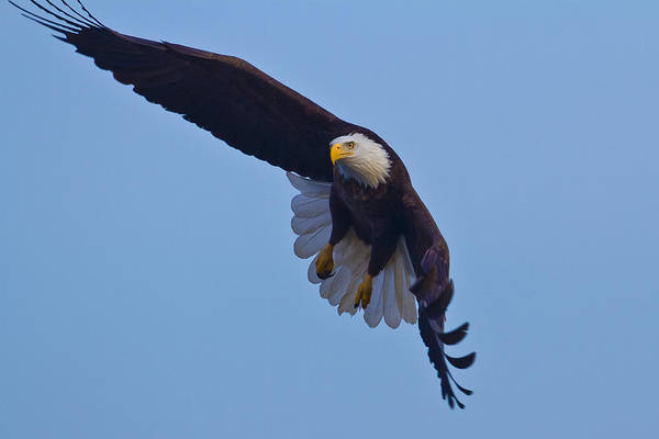 Photograph - Eagle Day by Jack R Perry