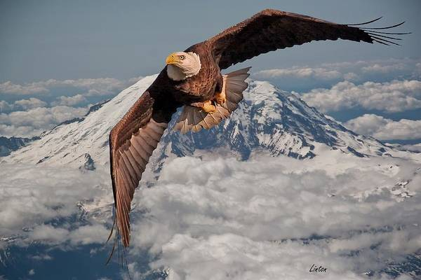 Photograph - Eagle Eye by Larry Linton