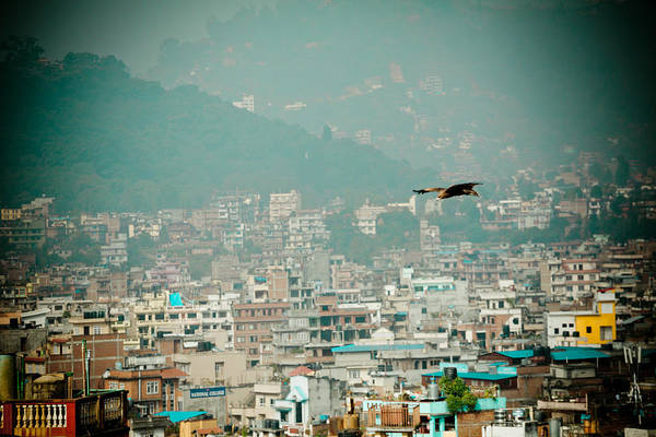 Photograph - Eagle Fly About Kathmandu by Raimond Klavins