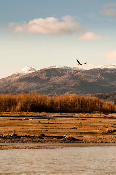 Haines Falls Photograph - Eagle In Fall by Michele Cornelius