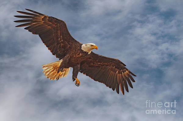 Photograph - Eagle In The Sky by Beth Sargent