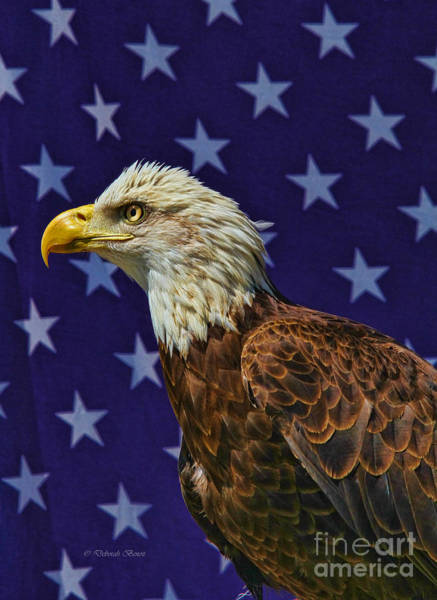 Photograph - Eagle In The Starz by Deborah Benoit
