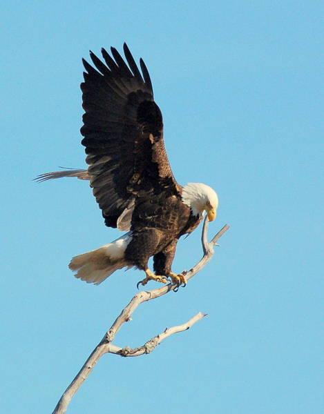 Photograph - Eagle by Jeremiah John McBride
