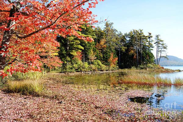 Photograph - Eagle Lake Autumn by David Birchall