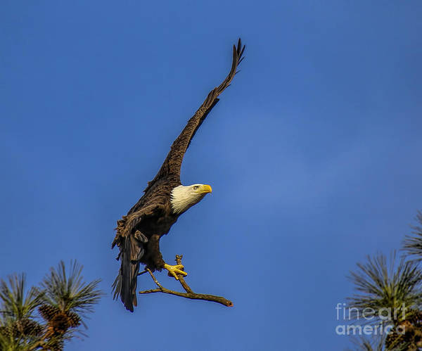 Photograph - Eagle Nest Building by Barbara Bowen