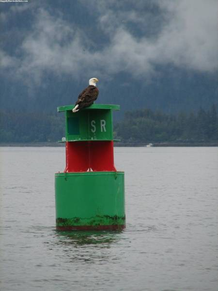 Photograph - Eagle On Bouy by KarinThue