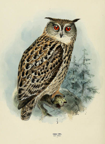 Owl Painting - Eagle Owl by Dreyer Wildlife Print Collections