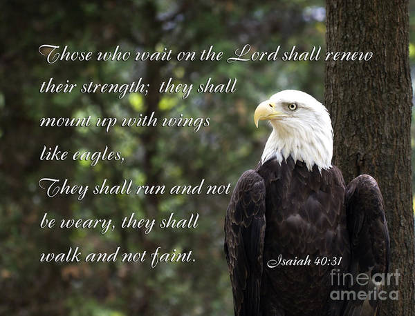 Photograph - Eagle Scripture Isaiah by Jill Lang