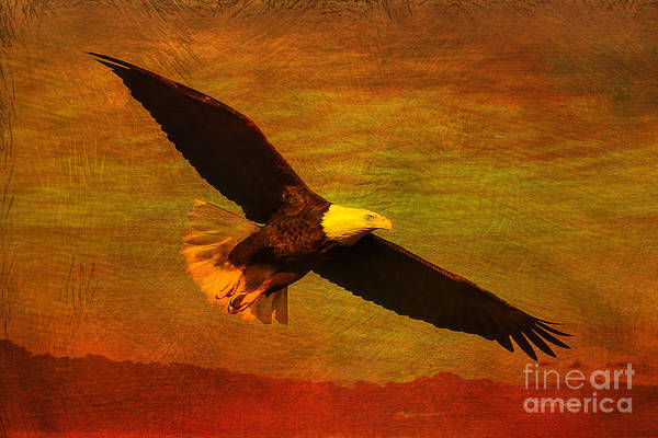Photograph - Eagle Spirit by Deborah Benoit