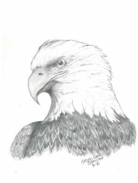 Avian Drawing - Eagle Symbol Of Freedom by Sharon Blanchard