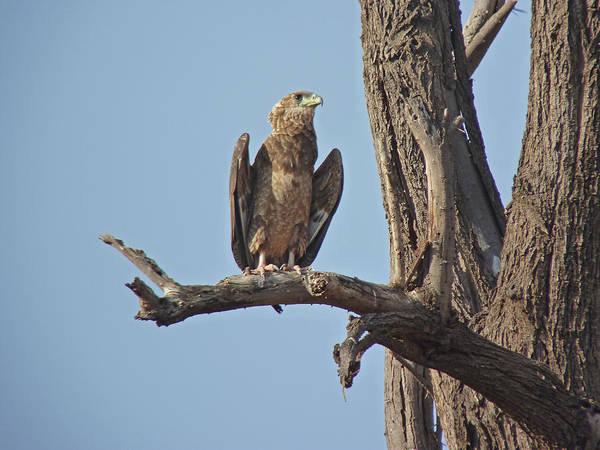 Photograph - Eagle by Tony Murtagh