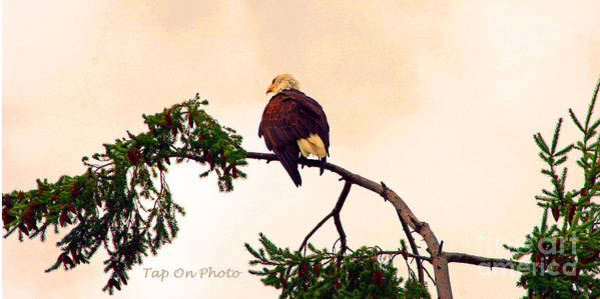 Photograph - Eagle Watch by Tap On Photo