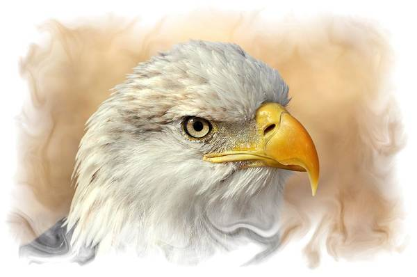 Photograph - Eagle6 by Marty Koch