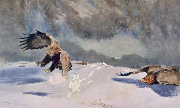 Eagle Drawing - Eagles And Rabbit, 1922 by Bruno Andreas Liljefors