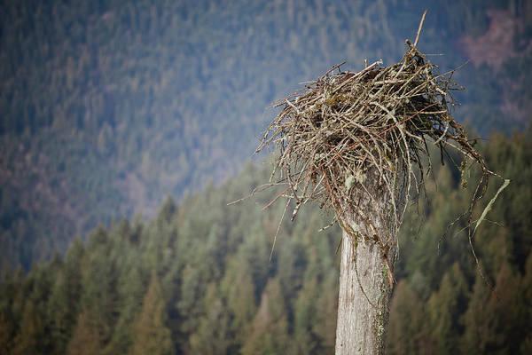 Empty Nest Wall Art - Photograph - Eagles Nest by Christopher Kimmel