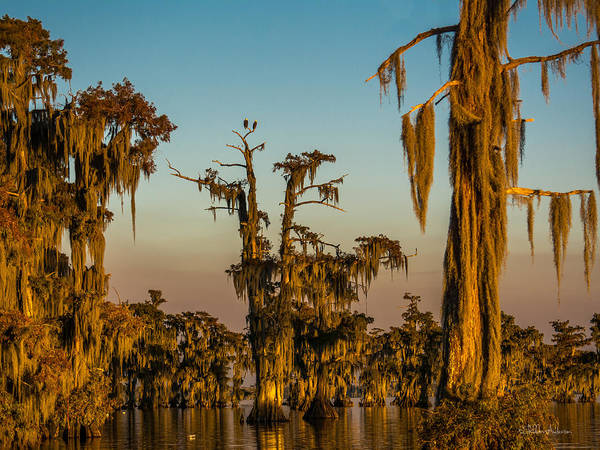 Bald Cypress Digital Art - Eagles Perch by Sheldon Anderson