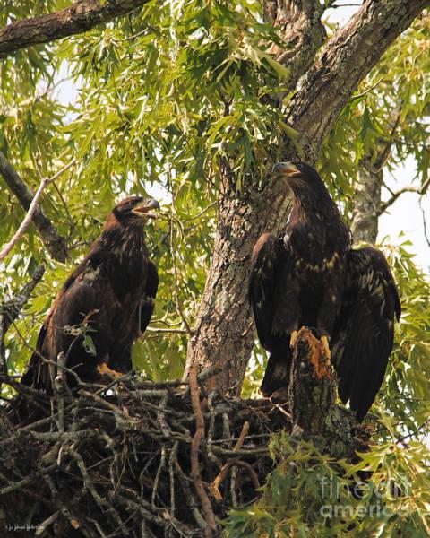 Photograph - Eaglets A Final Portrait by Jai Johnson