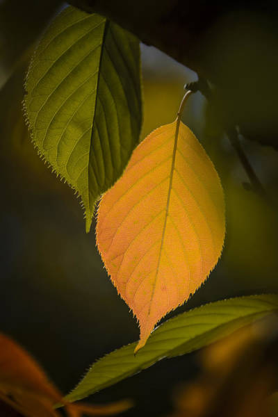 Photograph - Early Autumn Color II by Robert Mitchell