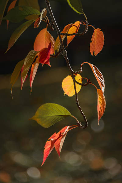 Photograph - Early Autumn Color by Robert Mitchell