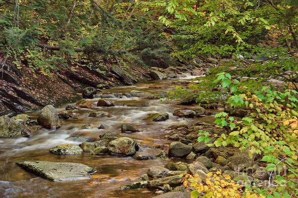 Photograph - Early Autumn On Roaring Branch by Charles Kozierok