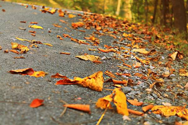 Photograph - Early Autumn Road by Candice Trimble
