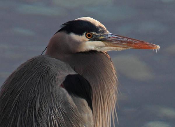 Photograph - Early Bird by Randy Hall