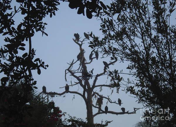Photograph - Early Birds by Megan Dirsa-DuBois