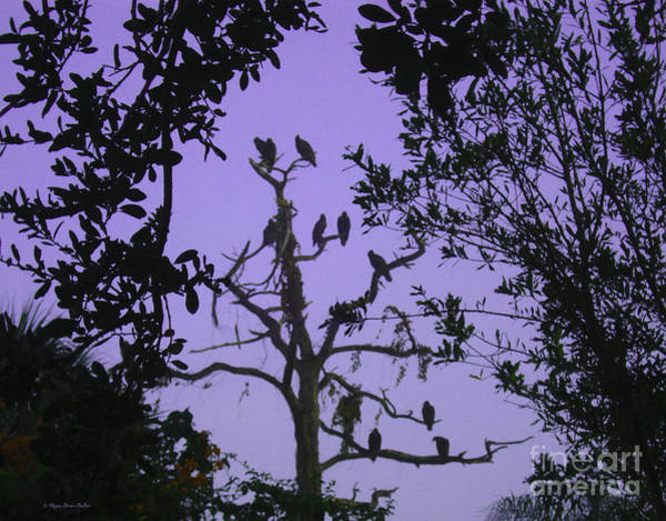 Photograph - Early Birds W/hue by Megan Dirsa-DuBois