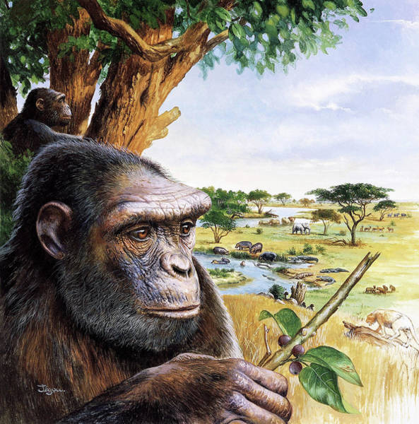 Controversial Wall Art - Photograph - Early Hominid by Christian Jegou Publiphoto Diffusion/ Science Photo Library
