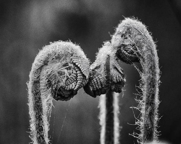 Fern Photograph - Early Morning Conference by Susan Capuano