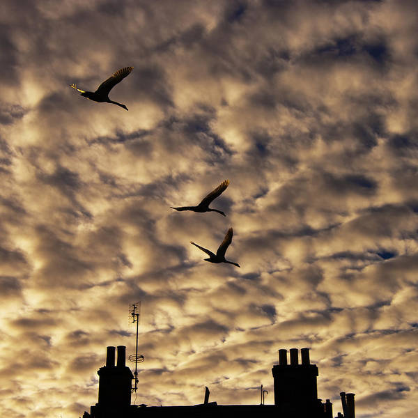 Photograph - Early Morning Flight by Ross G Strachan