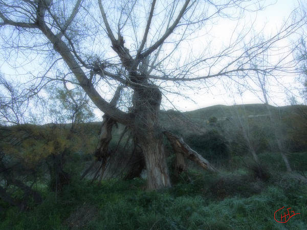 Photograph - Early Morning January Wild Mountain Nature In Spain  by Colette V Hera  Guggenheim