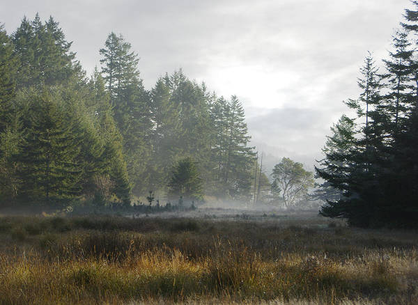Photograph - Early Morning Mist by Marilyn Wilson