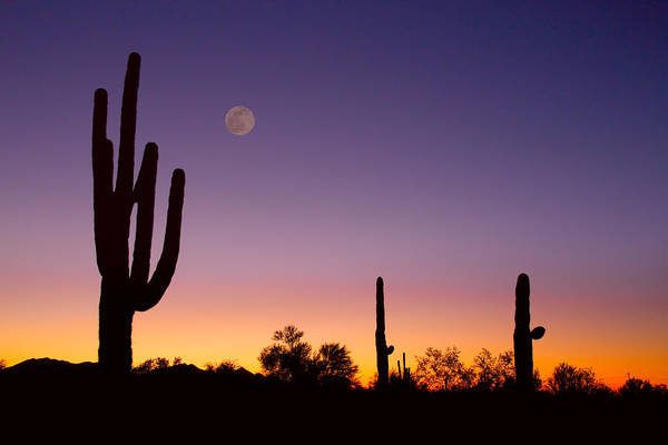 Photograph - Early Morning Southwest Usa Desert Moon Glow by James BO Insogna