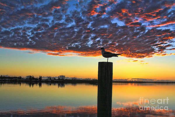 Photograph - Early Morning View by Deborah Benoit