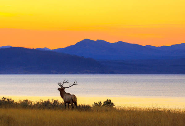 Yellowstone Photograph - Early Singer by Kadek Susanto