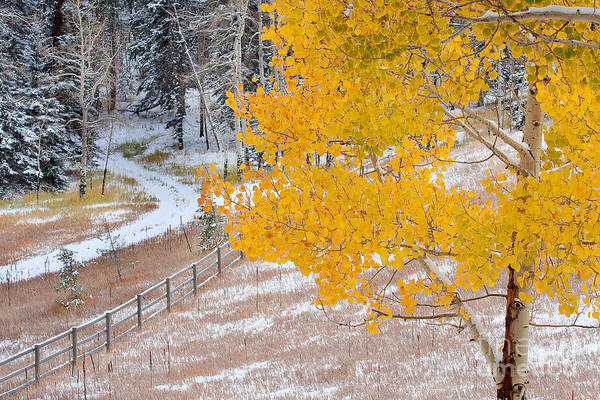Photograph - Early Snow by Jim Garrison