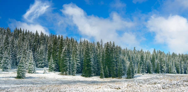 Wall Art - Photograph - Early Snow by Tim Reaves