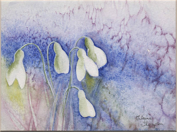Snowdrop Painting - Early Snowdrops by Elaine F Thompson